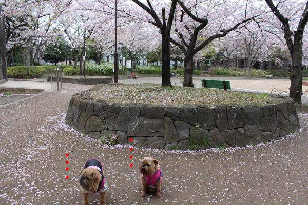 sakurami5.jpg