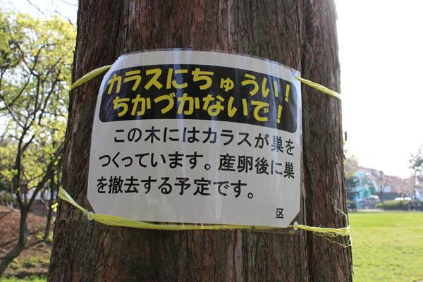 umenoki77.jpg
