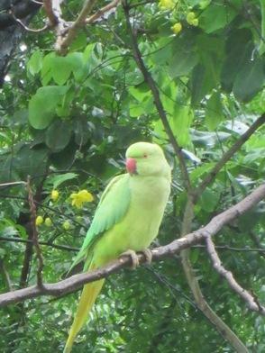 parrot080813a.jpg
