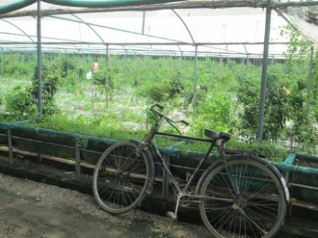 strawberry-farm-aug13.jpg