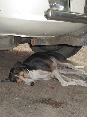 straydog-sept13.jpg