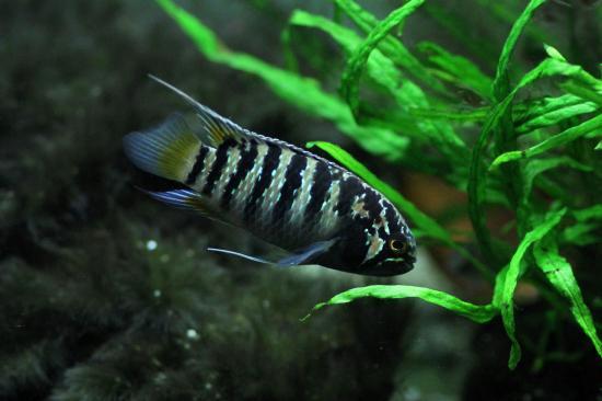 イバナカラアドケタ.トゥッカーノ♀33