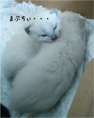 生後14日目撮影-4