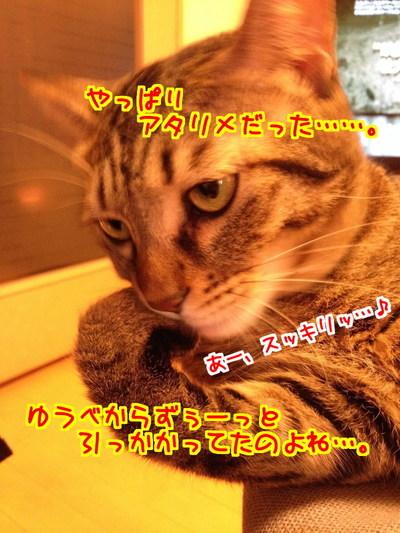 F17oM2BQpOly6Rg1412670533_1412670733.jpg