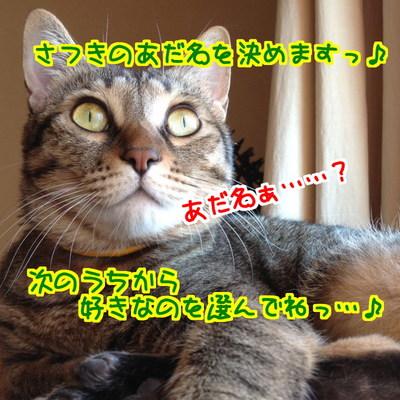 SRcJsyhPt6KM86t1412269891_1412270164.jpg