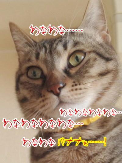 T_HAM5QOwPr4DnH1412082976_1412083322.jpg