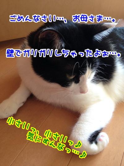 lrjBTw4VkFlmLYv1410952103_1410952310.jpg