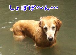 DSC_0575aquo2w25.jpg