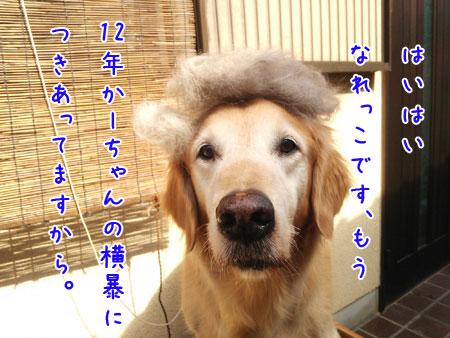 DSC_0831aquo2w45.jpg