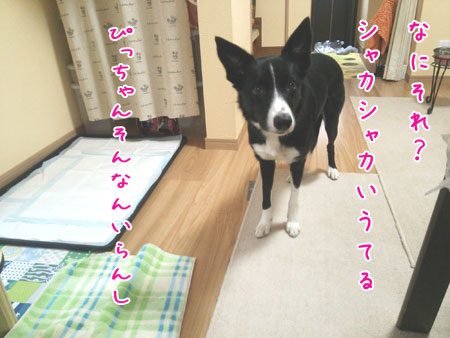 DSC_1269aquo2w45.jpg