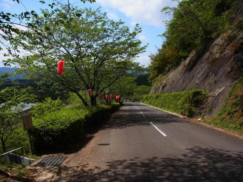 13.4.7葉桜とツツジとラン1
