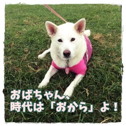 koyuki2.jpg