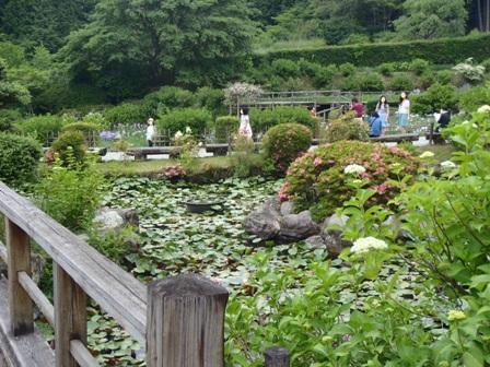 69滝谷睡蓮池blog