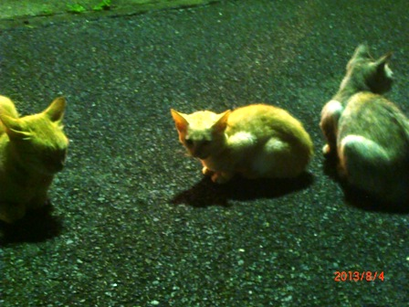 84くつろぐ猫一家2