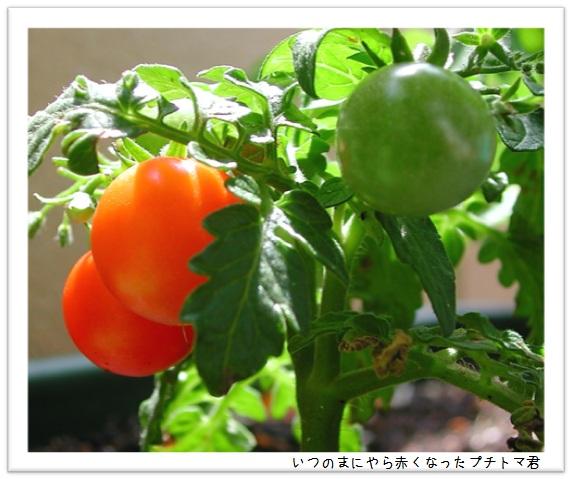 20130610_04.jpg