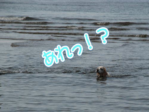 2013・07・21白浜5