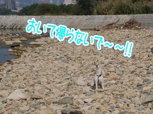 2013・11・02コスモス畑6
