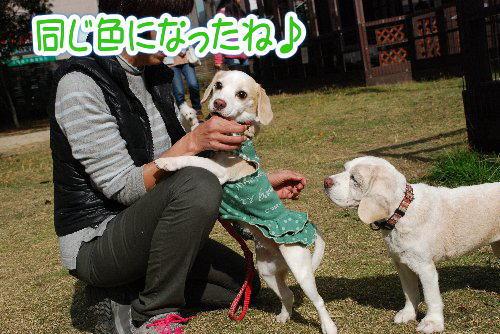 2013・11・23塚オフ4.