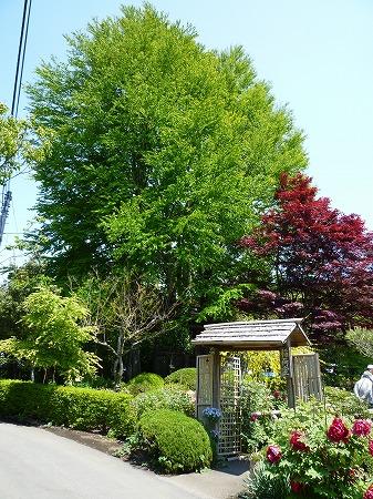 2013.5.4.karasuyama 022