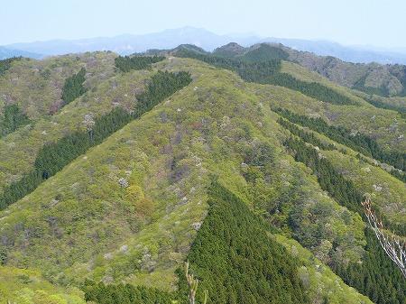 2013.5.9.narukamiyama 045