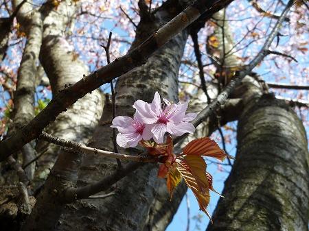 2013.5.14.akayashio 006