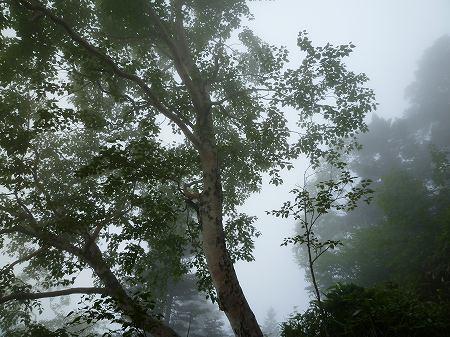 2013.8.5.nenagusayama 056