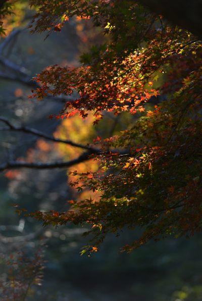 2013-11-08_0081-400.jpg