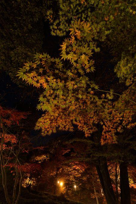 2013-11-13_0066-450.jpg
