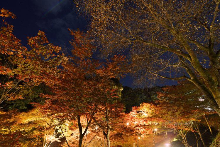 2013-11-13_0072-750.jpg