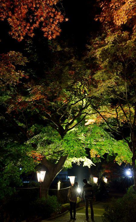 2013-11-13_0095-450.jpg