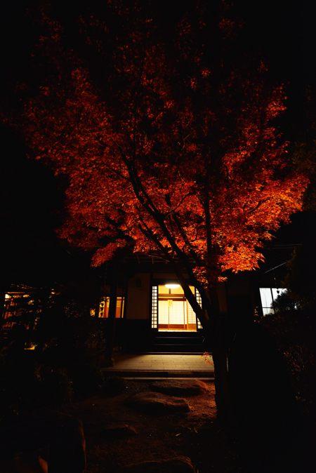 2013-11-22_0137-450.jpg