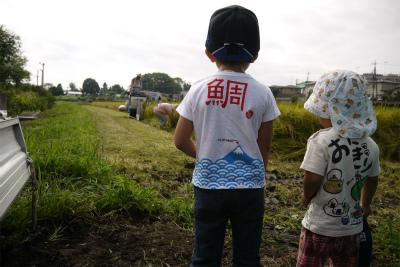 稲刈り見学