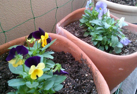gardening25.jpg