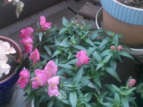 gardening9.jpg