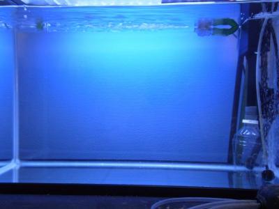 60cm水槽プチリセット20130514