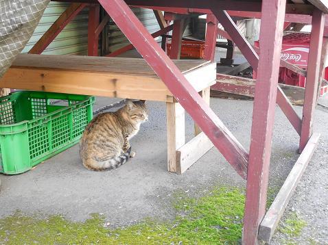 通りすがりに見かけた猫(743)