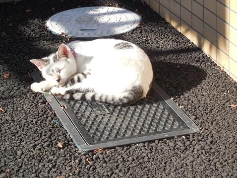 通りすがりに見かけた猫(744)