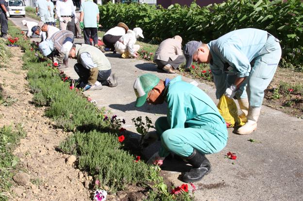 20130613沼田長生クラブが花の定植ボランティア