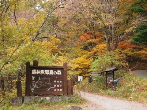 野鳥の森入口131029
