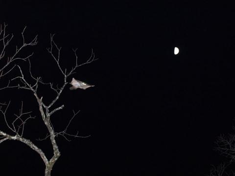 月とムササビ131111