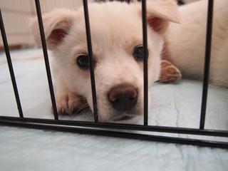 犬123ベル元