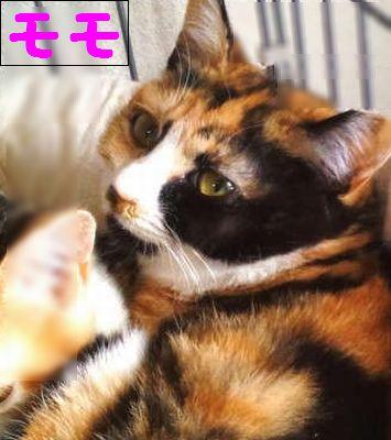 cat256みかんモモ)元