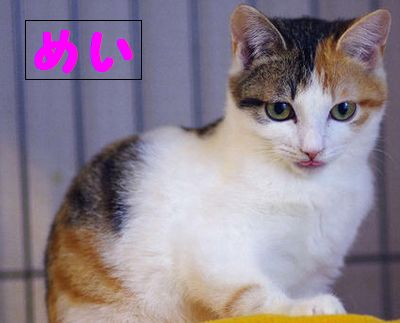 cat257ゆず(めい)元
