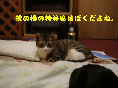 インディ枕