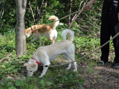 犬  チョコ&ミルク2