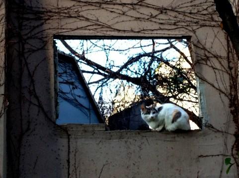仕事から帰ると猫が・・・