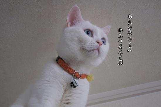 1_20130502071912.jpg