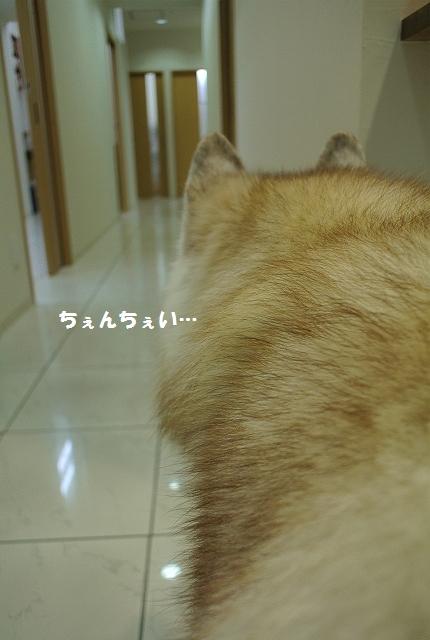 DSC_3296_2013091613243390e.jpg
