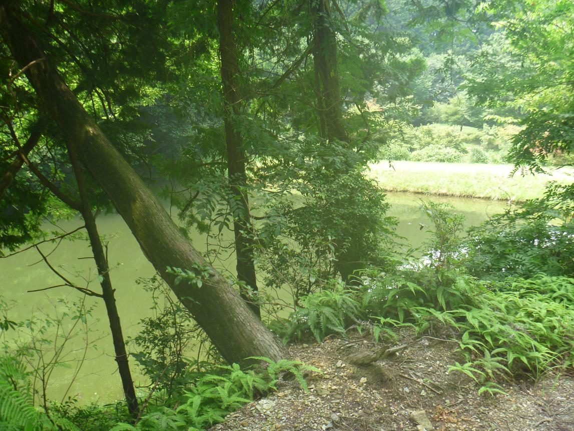 袋谷親水公園 (9)