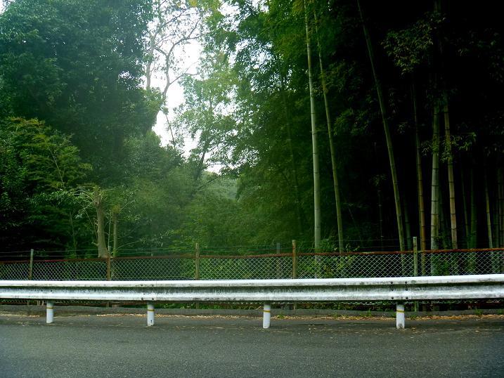 堀跡 (1)